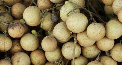 The Health Benefits of Longan Fruit ingredient in