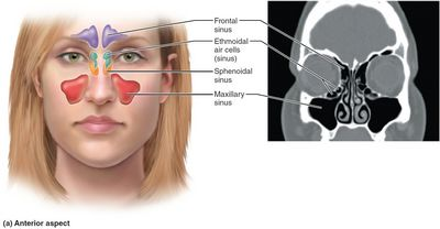 What Causes Sinus Infection Drooling? You may also